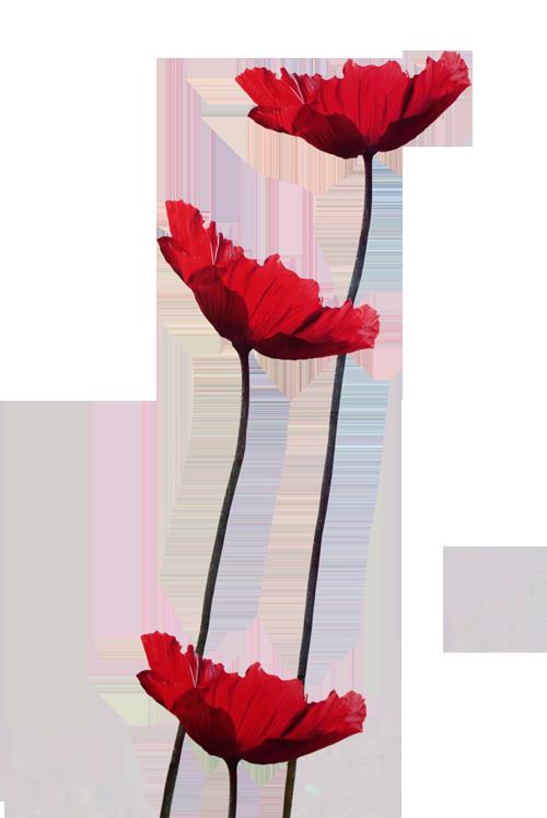 Rotlicht Nb
